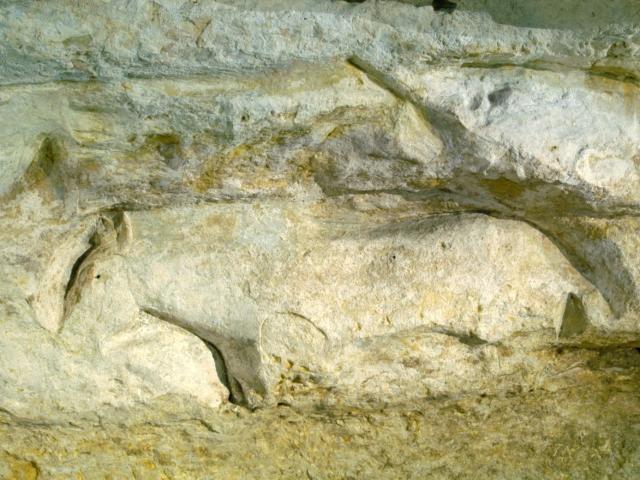 Abri du Cap Blanc à Marquay et ses bas-reliefs préhistoriques