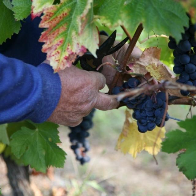 Bergerac Et Ses Vins 7