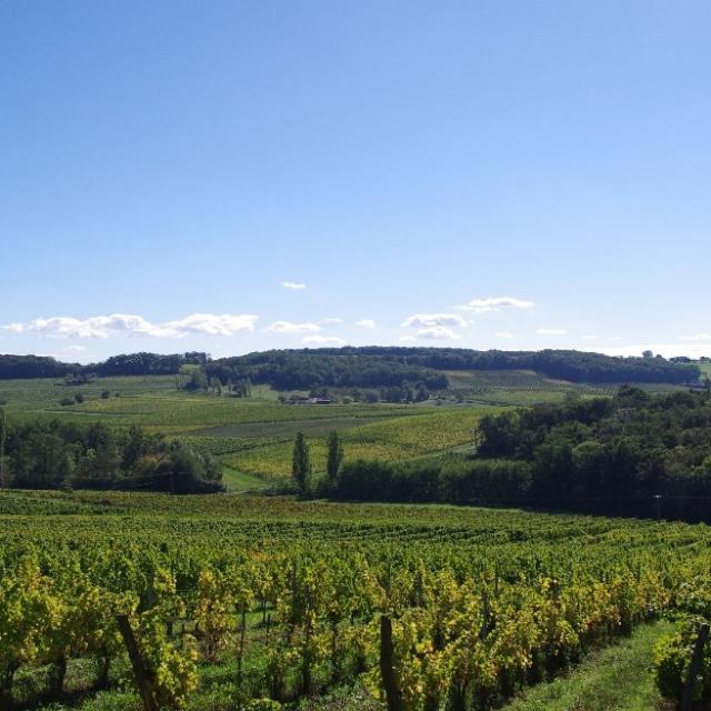 Bergerac Et Ses Vins