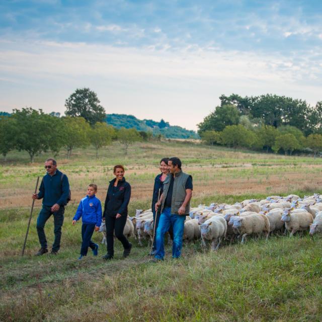 L'agneau du périgord à l'honneur lors des journées du goût et de la gastronomie à Sarlat