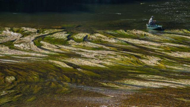 Pêcher sur la Dordogne