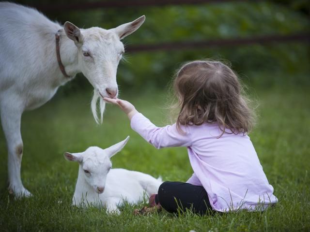 Chèvre et enfant