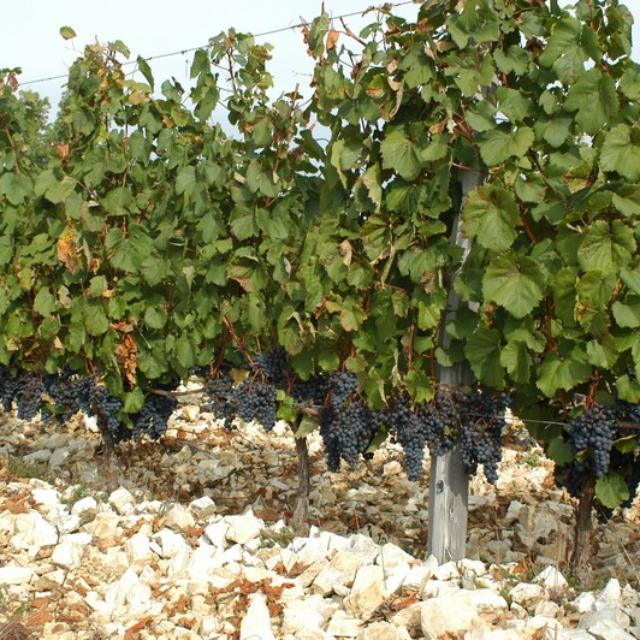 Cave du vin de Domme